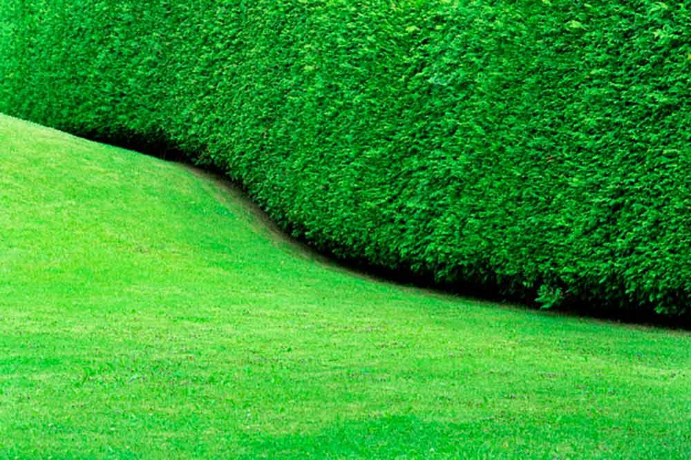 seto forma pared ondulada continua
